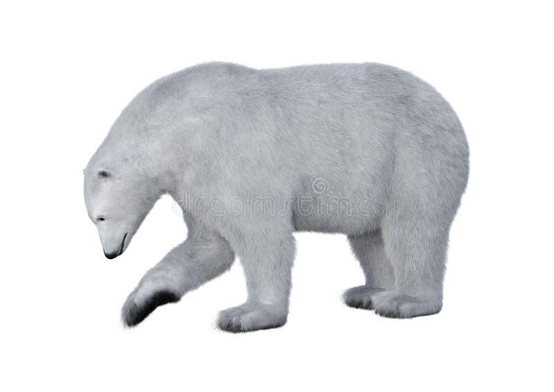 3D het Teruggeven Ijsbeer op Wit stock illustratie