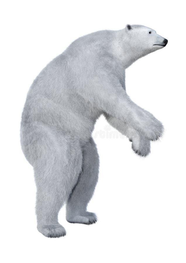 3D het Teruggeven Ijsbeer op Wit royalty-vrije illustratie