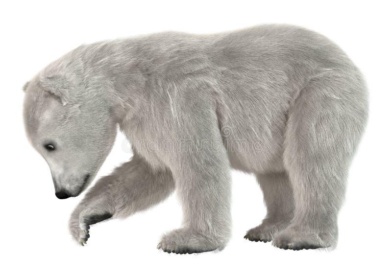 3D het Teruggeven Ijsbeerwelp op Wit royalty-vrije stock foto's
