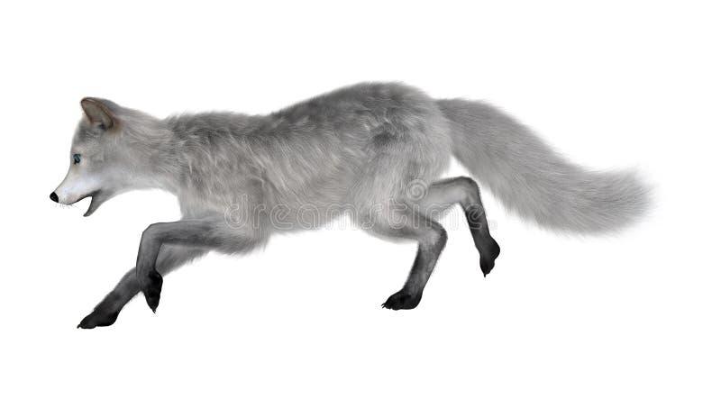 3D het Teruggeven Polaire Vos op Wit royalty-vrije stock afbeelding