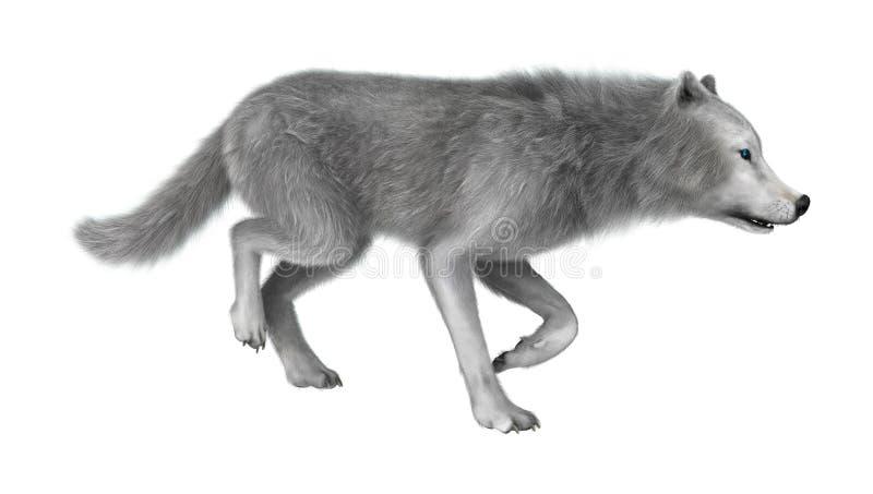 3D het Teruggeven Polaire Wolf op Wit royalty-vrije stock afbeelding