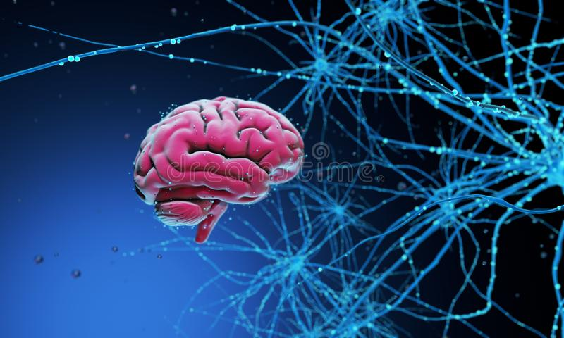 3D human brain. 3D model of the human brain on dark background surrounded by neural networks. 3d render. 3d illustration Synapses and neurons stock images