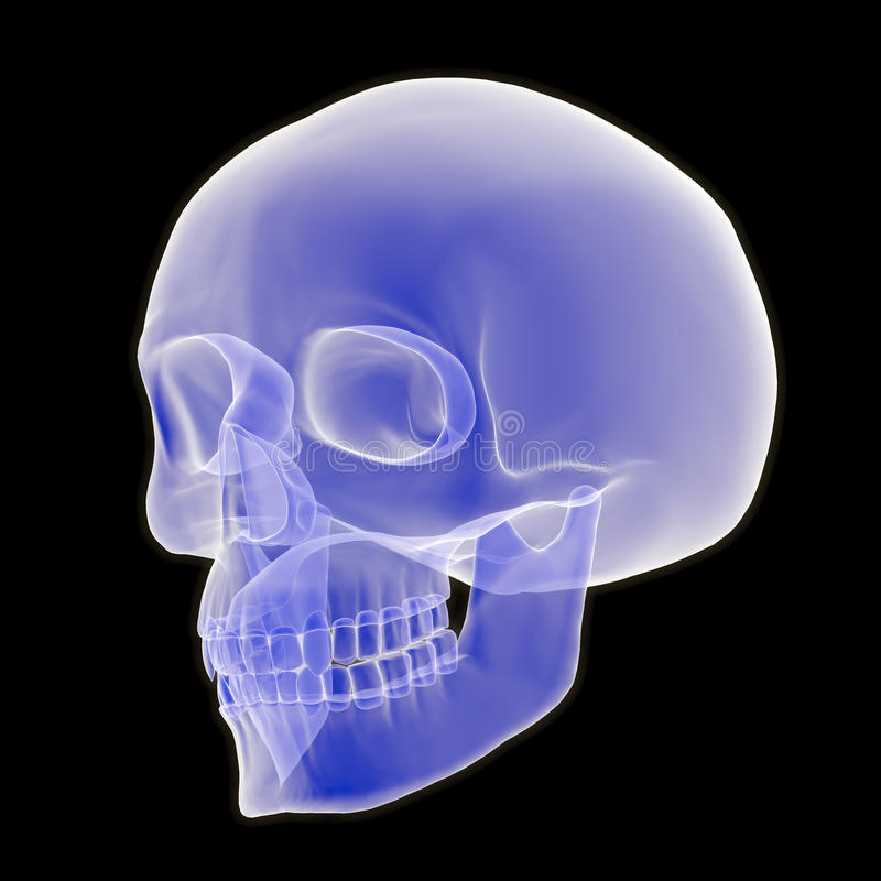 3D Human Skull Three Quarter View. An x-ray style 3D illustration depicting a human skull in three quarter view vector illustration