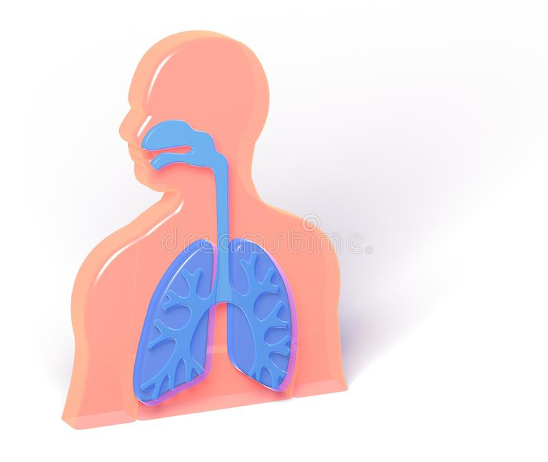 3D illustratie van anatomie met benadrukte blauwe longen royalty-vrije illustratie