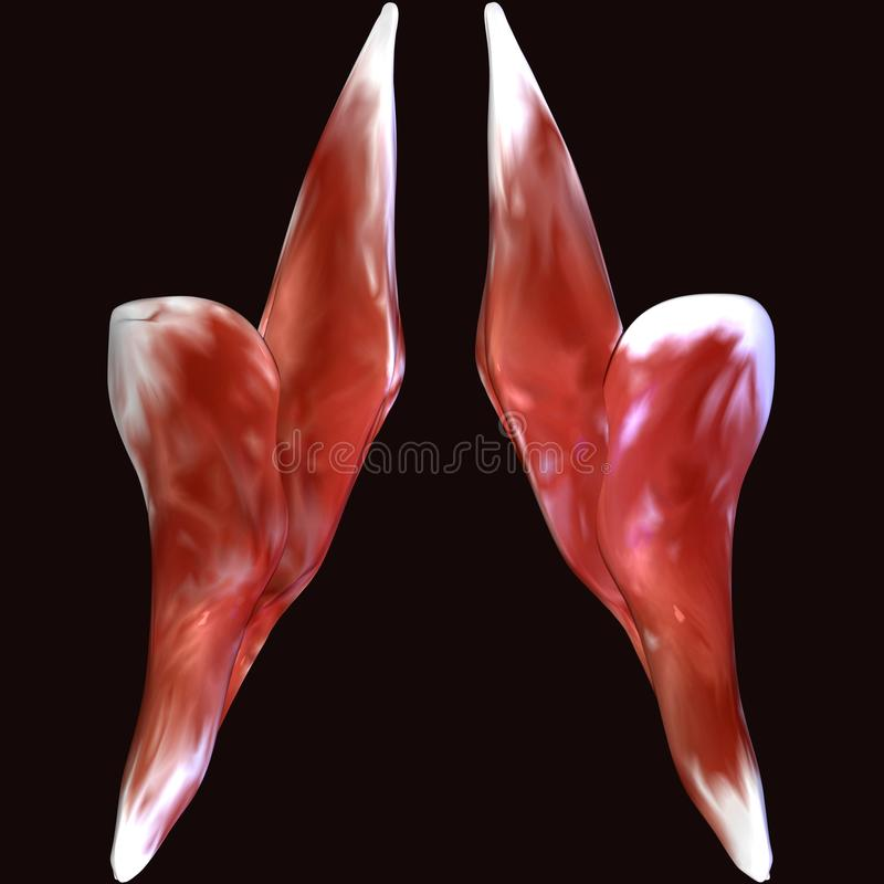 3d illustratie van de spier van het menselijk lichaamsskelet royalty-vrije illustratie