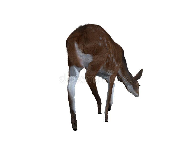 3d illustratie van een hert royalty-vrije illustratie