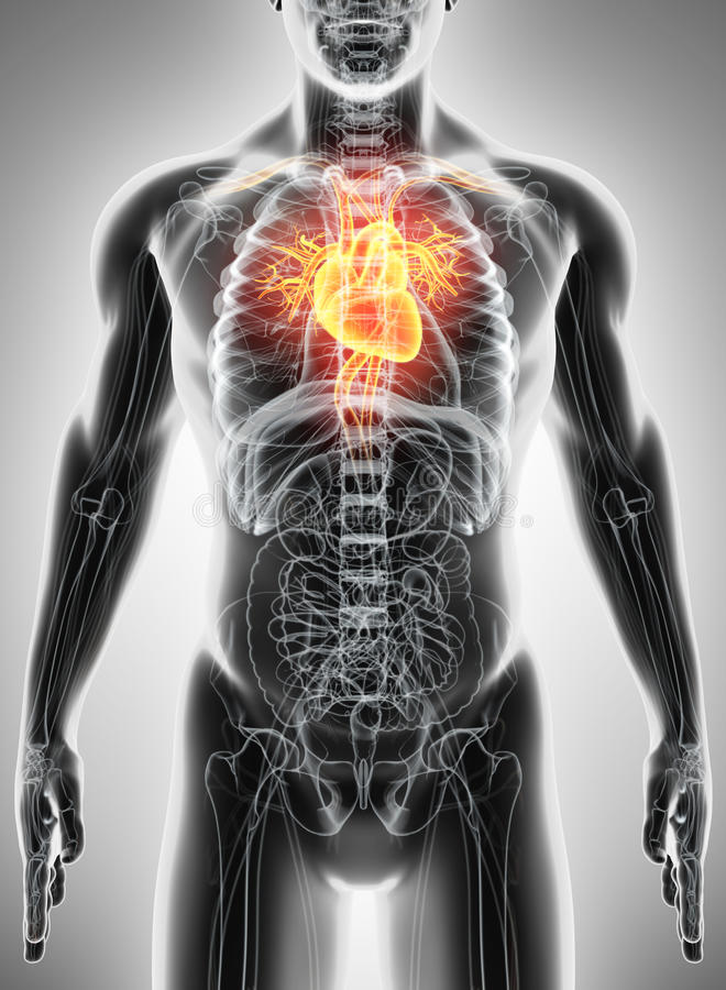 3D illustratie van Hart, medisch concept vector illustratie