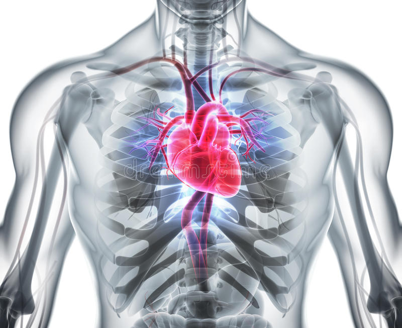3D illustratie van Hart, medisch concept stock illustratie