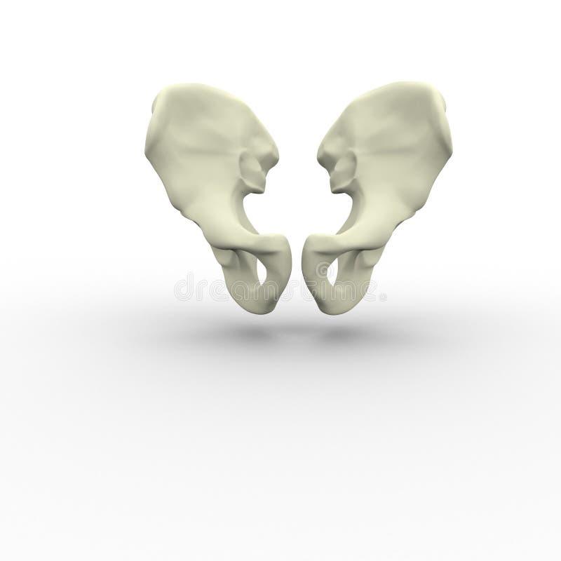 3d illustratie van menselijk lichaams skeletachtig bekken stock illustratie