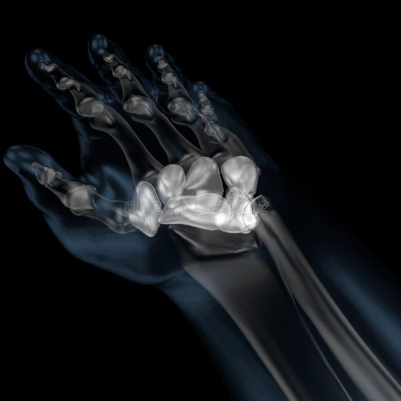 3d illustratie van menselijk lichaams skeletachtige handwortel stock illustratie