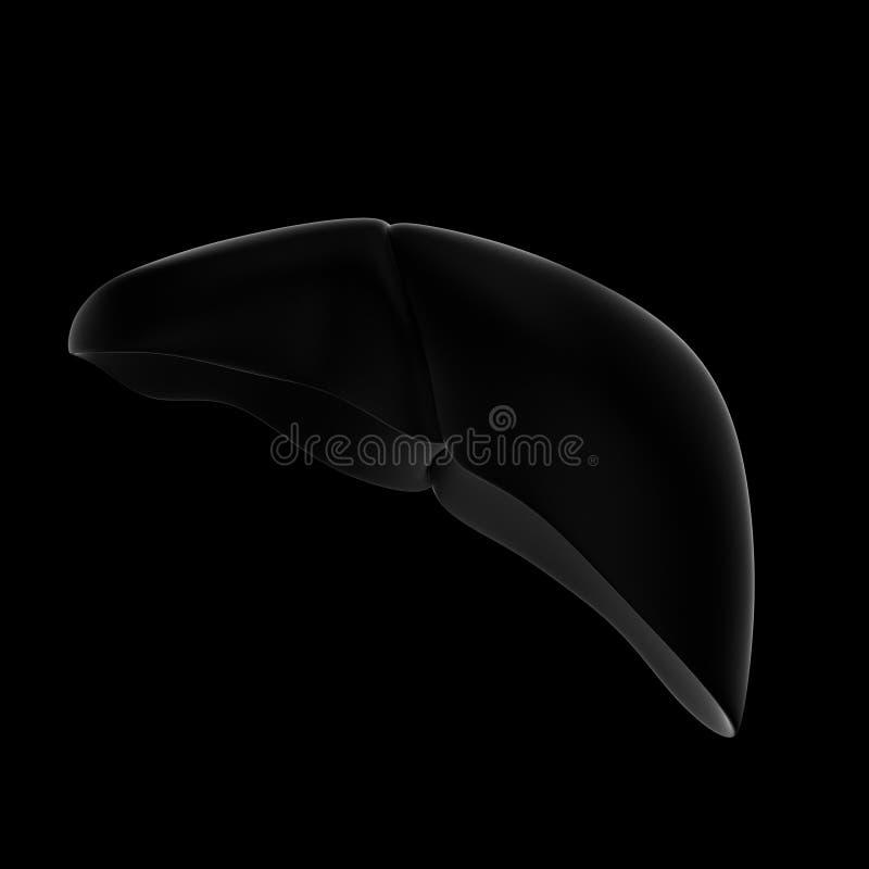 3D illustratie van menselijke lever zwarte achtergrond Front View royalty-vrije illustratie
