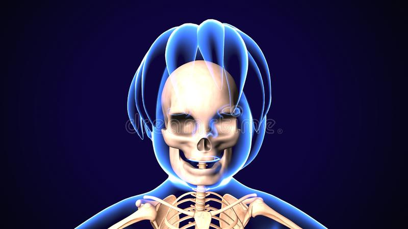 3D illustratie van schedelanatomie - een deel van menselijk skelet medisch concept royalty-vrije illustratie