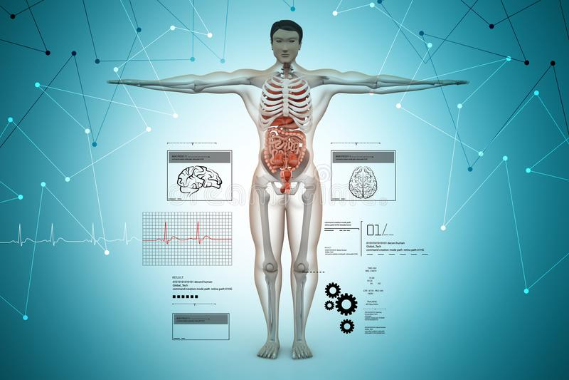 Anatomy of human body. 3d illustration of Anatomy of human body royalty free illustration