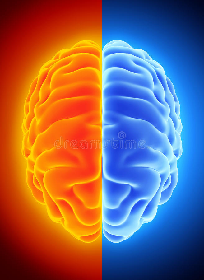 3D illustration of bright half blue and orange brain. 3D illustration of bright half blue and orange brain, anatomy and medical concept stock illustration
