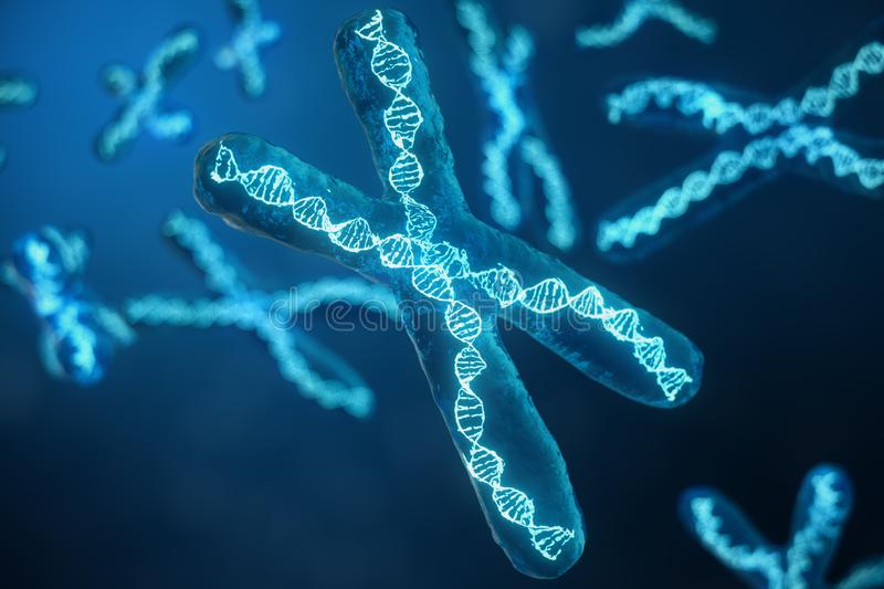 3D illustration X-Chromosomes with DNA carrying the genetic code. Genetics concept, medicine concept. Future, genetic royalty free illustration