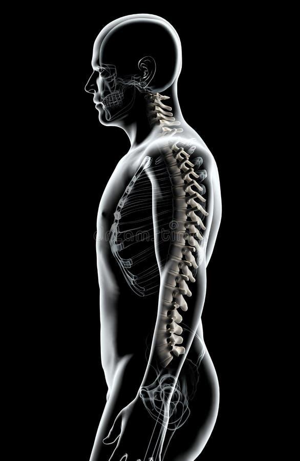 3D illustration d'épine, concept médical illustration stock