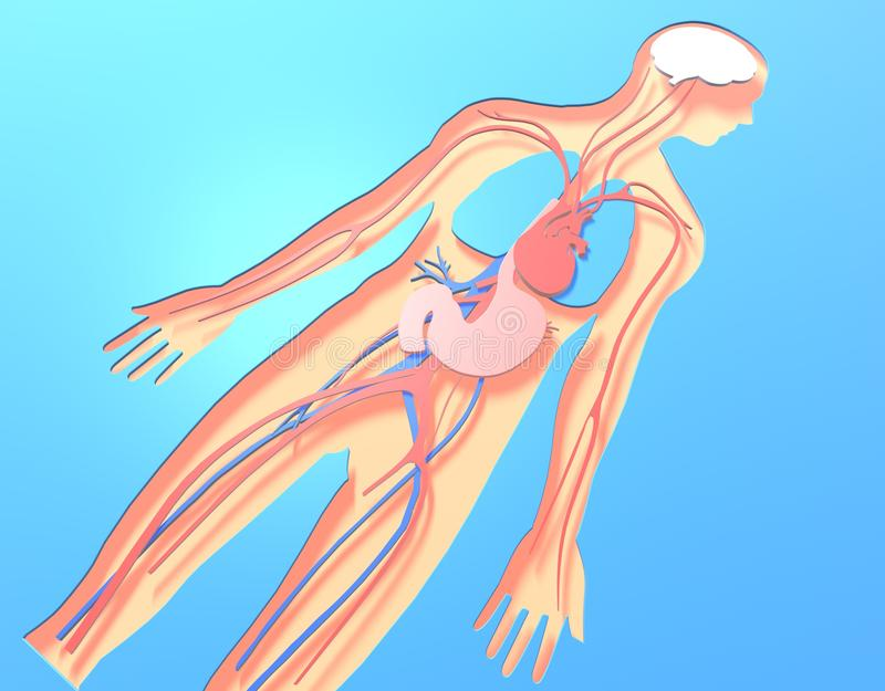 3D illustration of human anatomy made of cut paper view from above. vector illustration