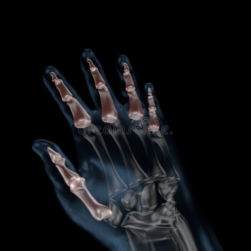 3d illustration of human body skeletal hand phalanges vector illustration