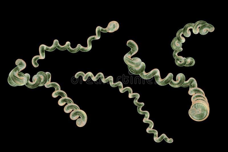Lyme disease borreliosis disease borrelia 3D rendering royalty free stock image
