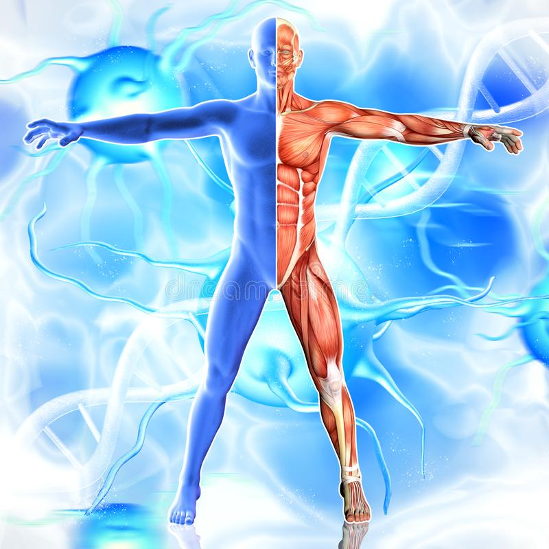 3d illustration of Male Body  Muscles Anatomy on virus and dna background royalty free illustration