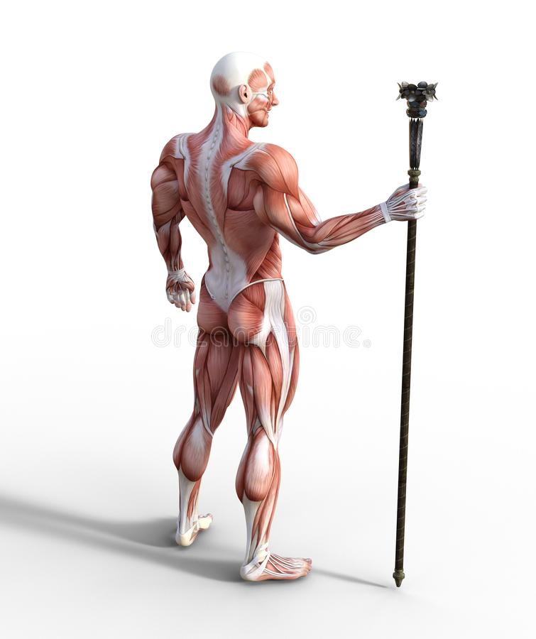 3D Illustration of Male Muscular System holding a staff. 3D illustration of a male muscular system holding a staff in a back view position royalty free illustration