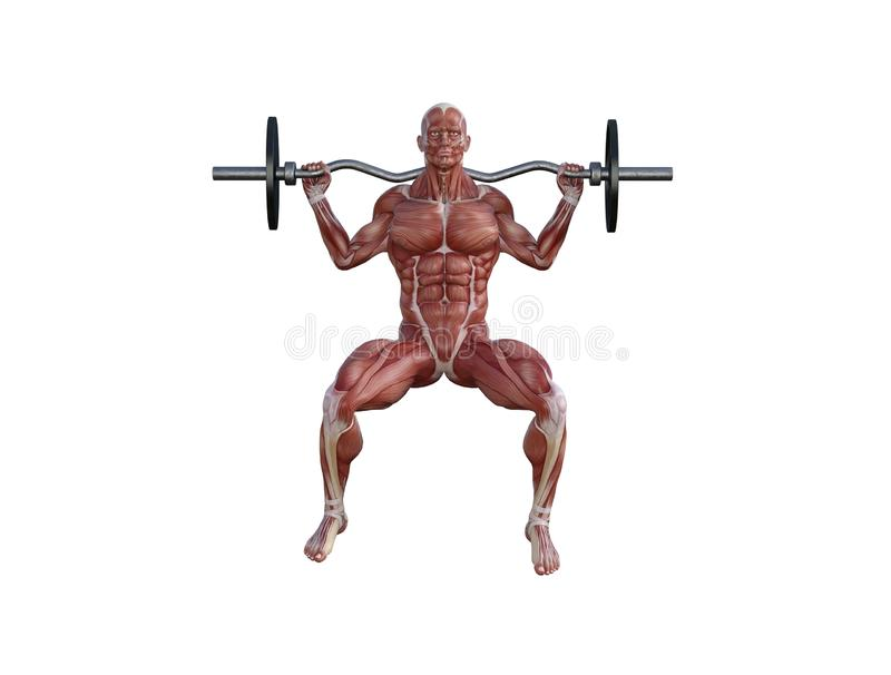 3D Illustration of a muscle man with barbell for bodybuilding exercises stock photos