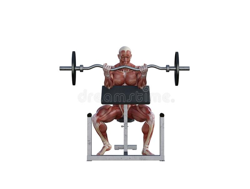 3D Illustration of a muscle man with barbell for bodybuilding exercises stock images