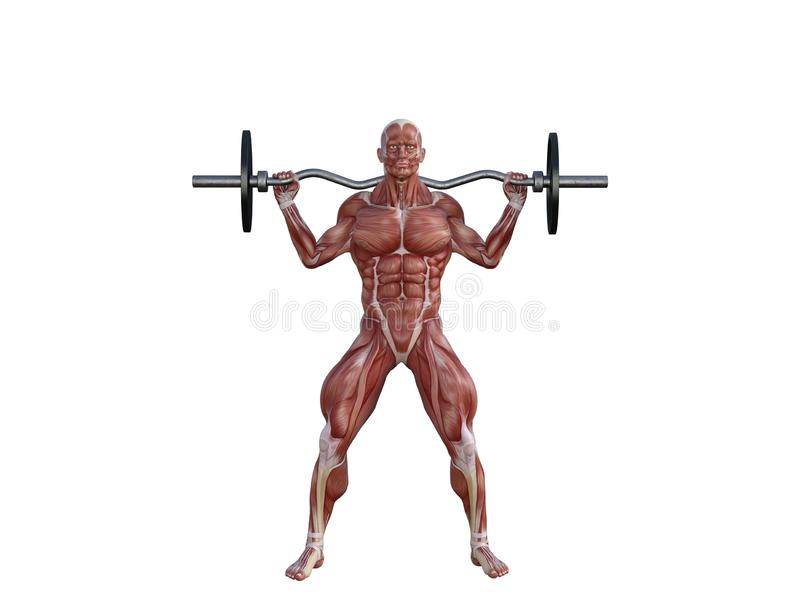 3D Illustration of a muscle man with barbell for bodybuilding exercises stock image