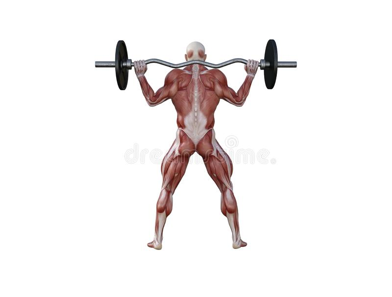 3D Illustration of a muscle man with barbell for bodybuilding exercises stock photography