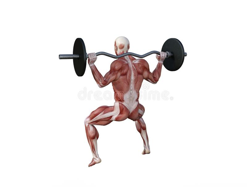 3D Illustration of a muscle man with barbell for bodybuilding exercises royalty free stock photos
