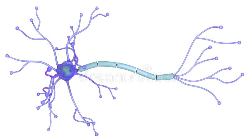 3D illustration of neuron royalty free stock photos
