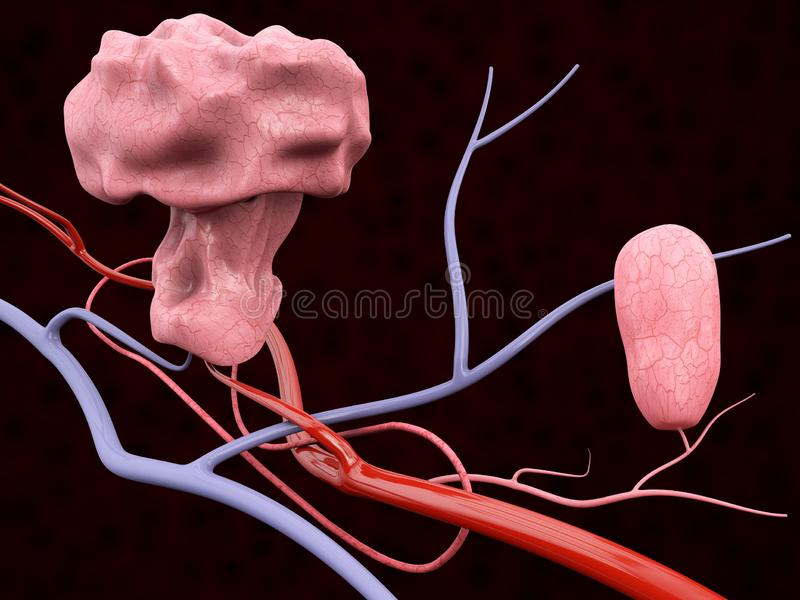 3d Illustration of Polyp with Blood Veins, isolated black background vector illustration