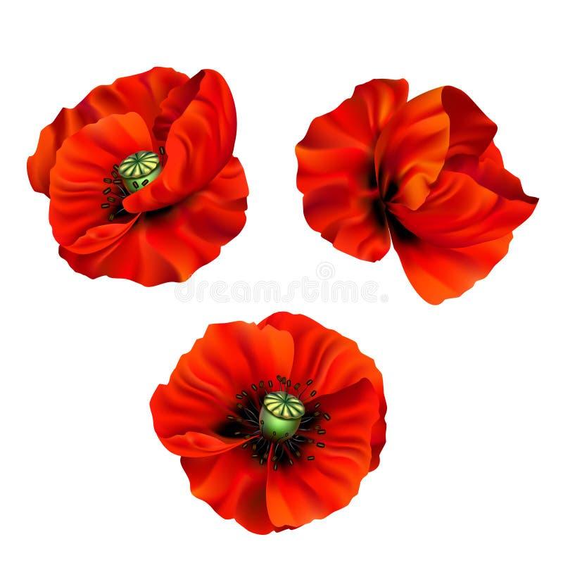 3d illustration of red poppy. Vector 3d illustration of a set of red poppy flowers for design vector illustration