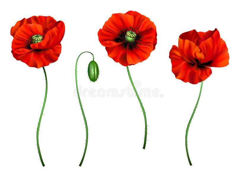3d illustration of red poppy. Vector 3d illustration of a set of red poppy flowers for design royalty free illustration