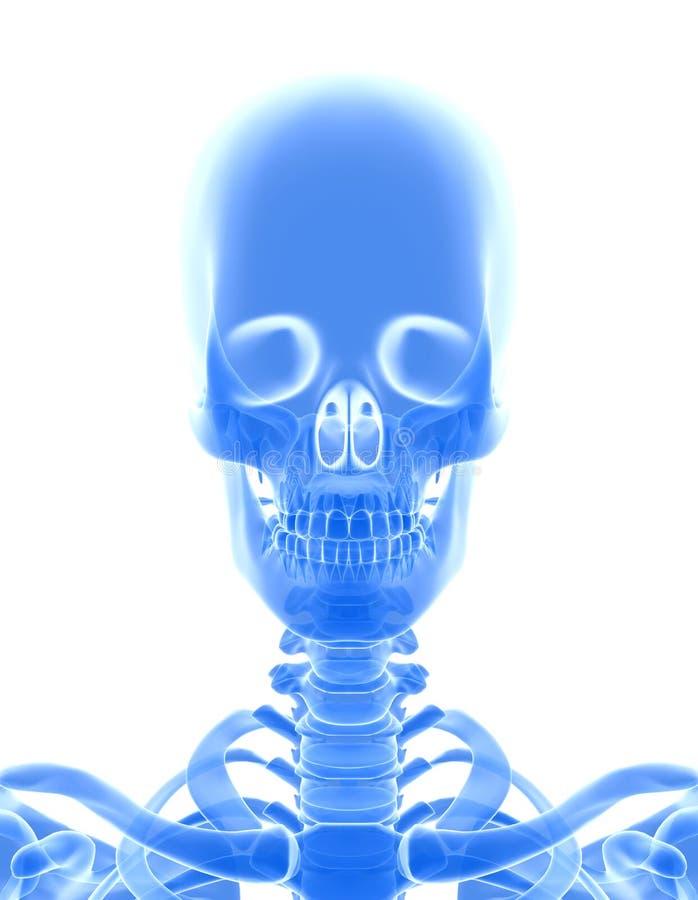 3D illustration of shiny blue skeleton system. vector illustration