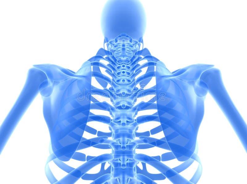 3D illustration of shiny blue skeleton system. stock illustration