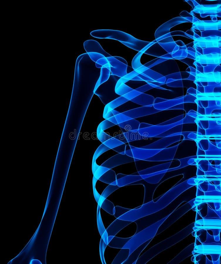3D illustration of shiny blue skeleton system. royalty free illustration