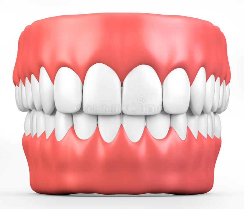 3D Illustration Teeth And Gum Model. Stock Illustration ...