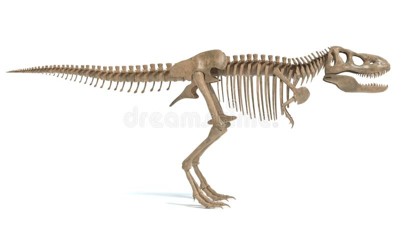 Tyrannosaurus Rex Skeleton Stock Illustrations 684 Tyrannosaurus Rex Skeleton Stock Illustrations Vectors Clipart Dreamstime