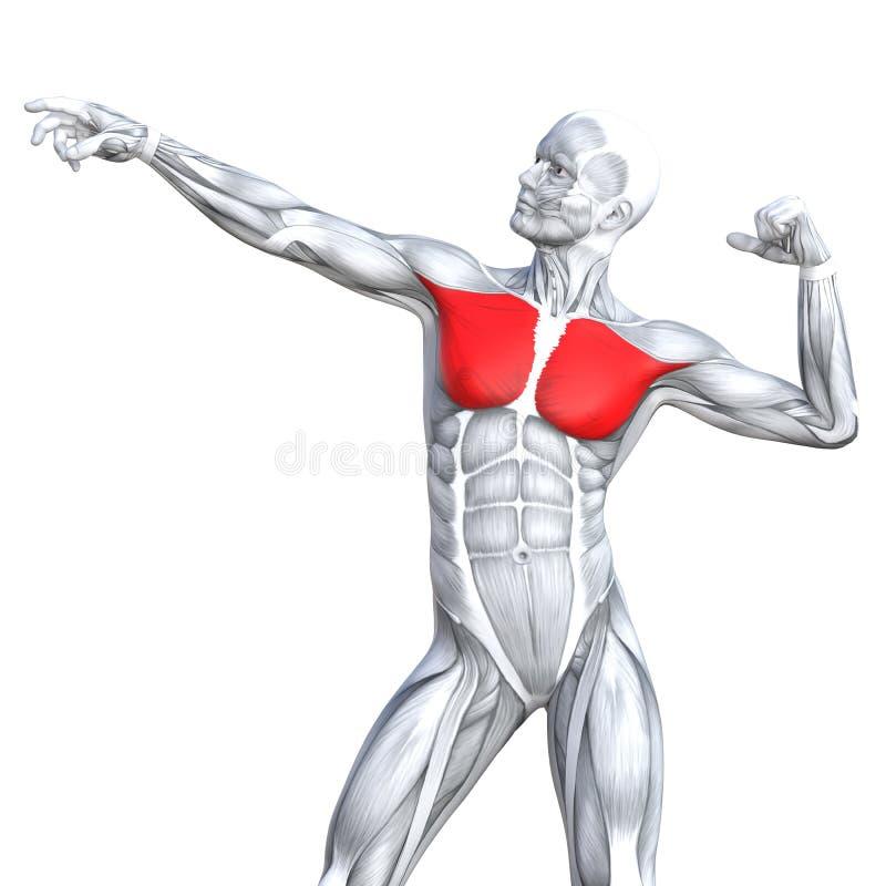3D ilustraci plecy napadu silna ludzka anatomia ilustracji