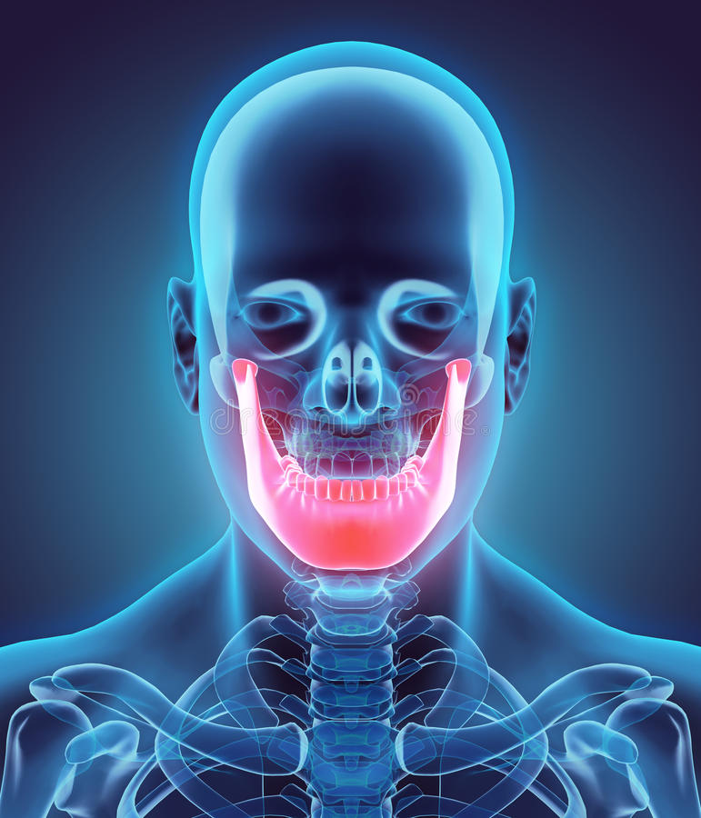 3D ilustracja żuchwa, medyczny pojęcie ilustracja wektor