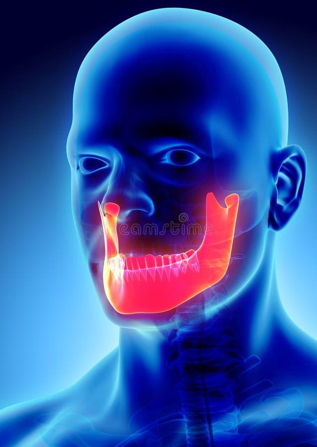 3D ilustracja żuchwa, medyczny pojęcie royalty ilustracja