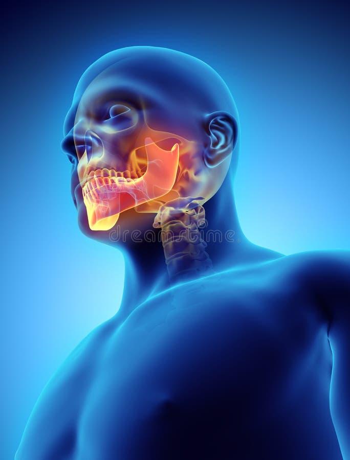3D ilustracja żuchwa, medyczny pojęcie ilustracji