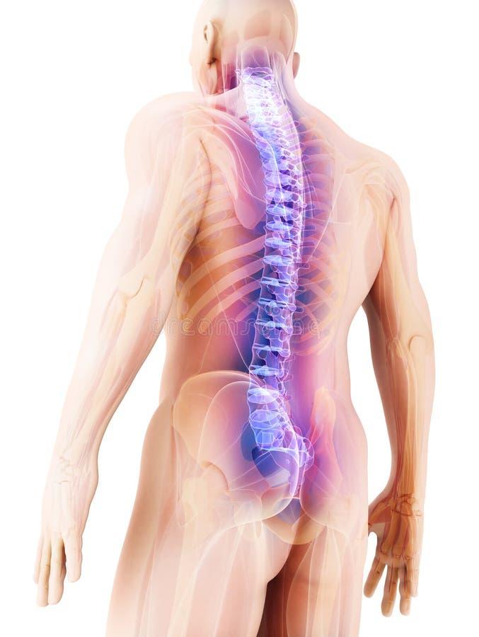 3D ilustracja kręgosłup, medyczny pojęcie royalty ilustracja