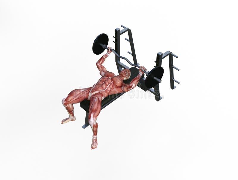 3D ilustracja mięśnia mężczyzna z barbell dla bodybuilding ćwiczy royalty ilustracja