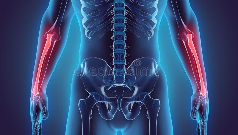 3D ilustracja promieniomierz, medyczny pojęcie royalty ilustracja