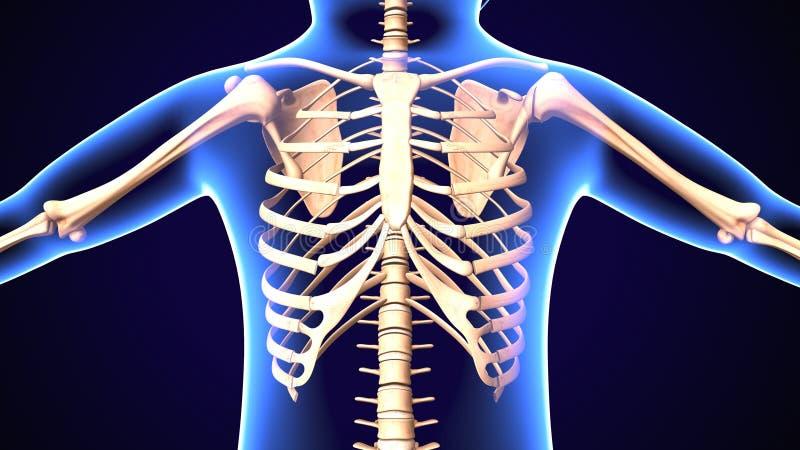 3d ilustracja Wśliznąć ziobro syndrom: Przyczyny, traktowanie i diagnoza, ilustracji