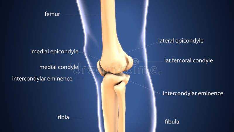 3d ilustracja zredukowana zapalona łączna kości anatomia ilustracji