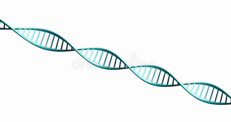 3d isolados rendem o modelo da corrente torcida do ADN. imagens de stock royalty free