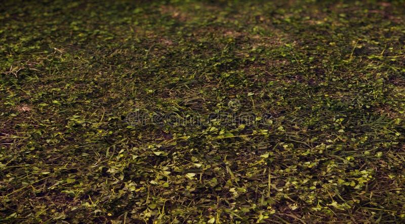 3d las mlejący dla tła zdjęcia stock